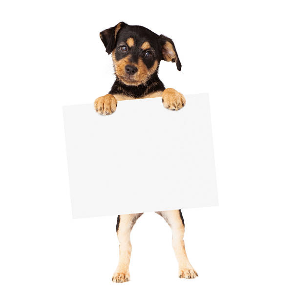 Black and Tan Puppy Holding Blank Sign stock photo