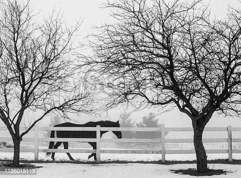 A horse walks along a white board fence on a foggy day.  The silhouettes of two small trees frame the horse.