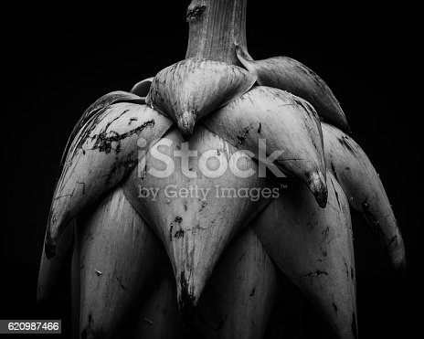 abstract image of an artichoke in black and white