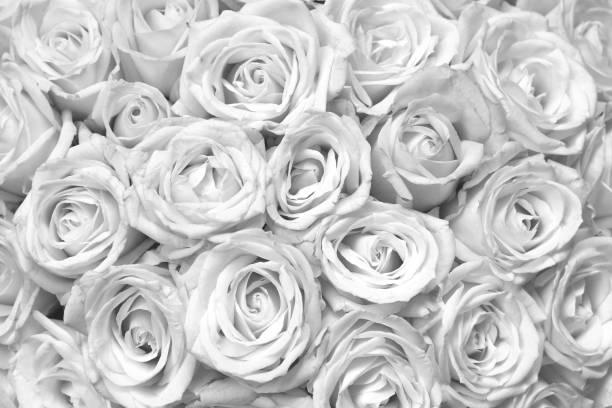 Black and white background with beautiful roses picture id1193737459?b=1&k=6&m=1193737459&s=612x612&w=0&h=gdegocautcaqy jw4b1nskbzx  2ifjuvwnund9ylti=