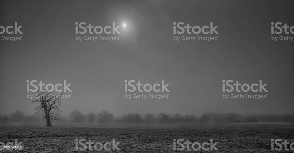 Black and white bare tree standing in foggy mist stock photo
