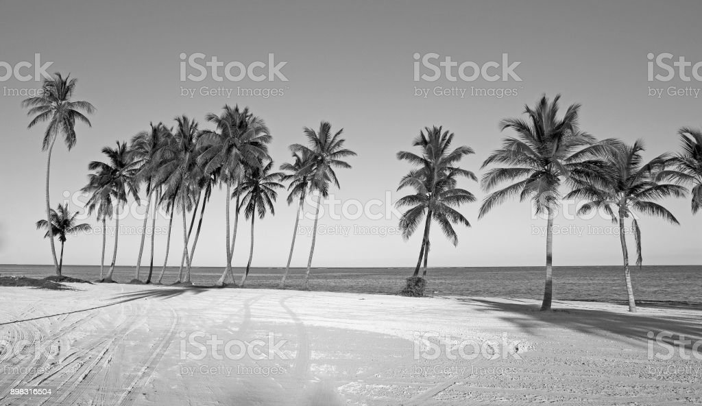 Black and white tropical beach with palm trees