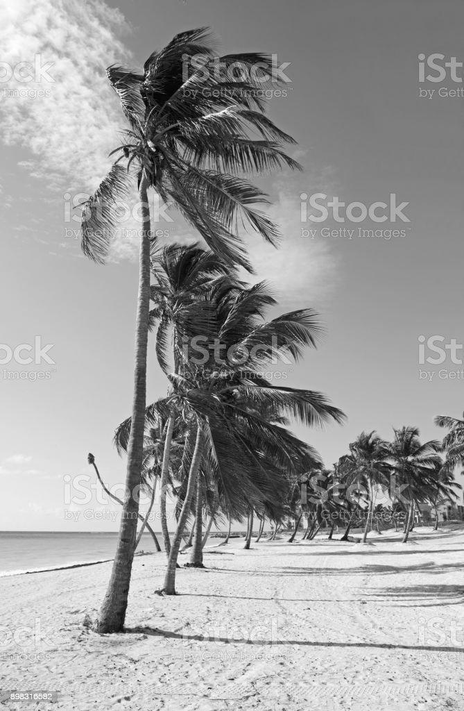 Black and white beach stock photo