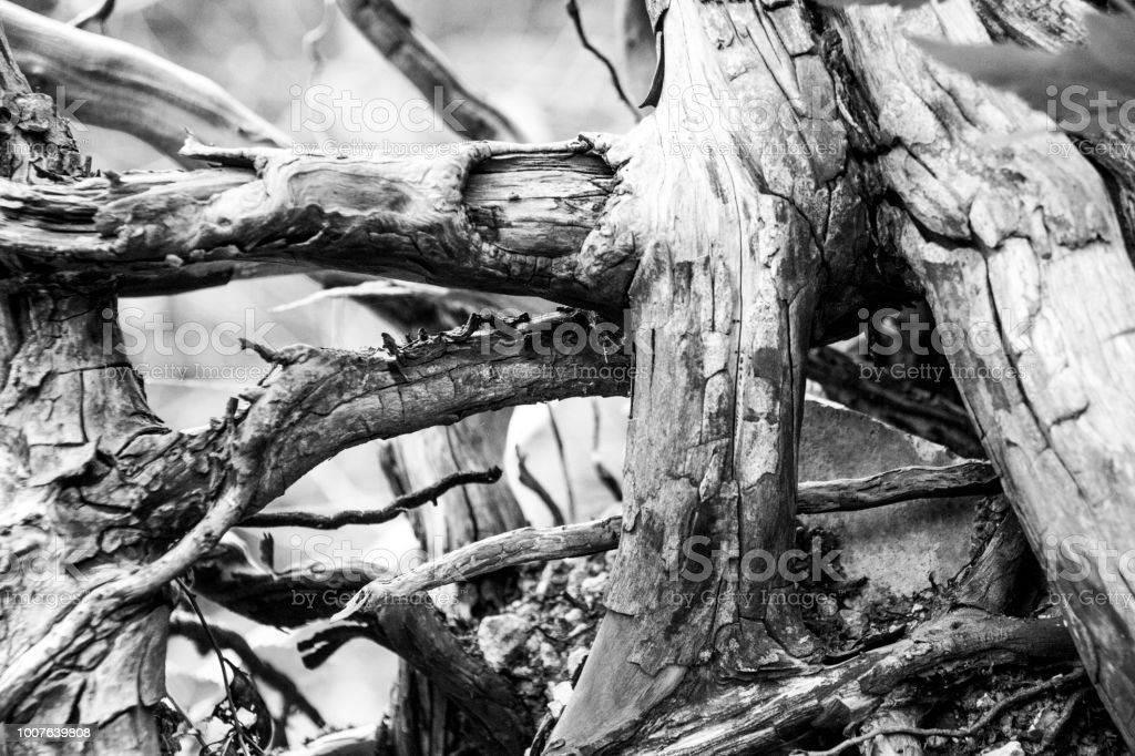 Black and white blown out tangle of branches stock photo