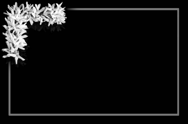 Black and white border forsythia flowers in background with gray frame and blank space for notice stock photo
