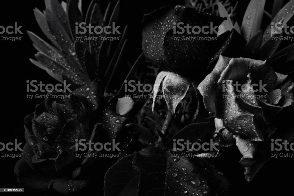 Black and white bouquet studio backdrop shot stock photo