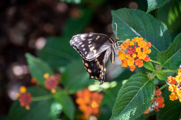 Black and white butterfly on small flowers stock photo