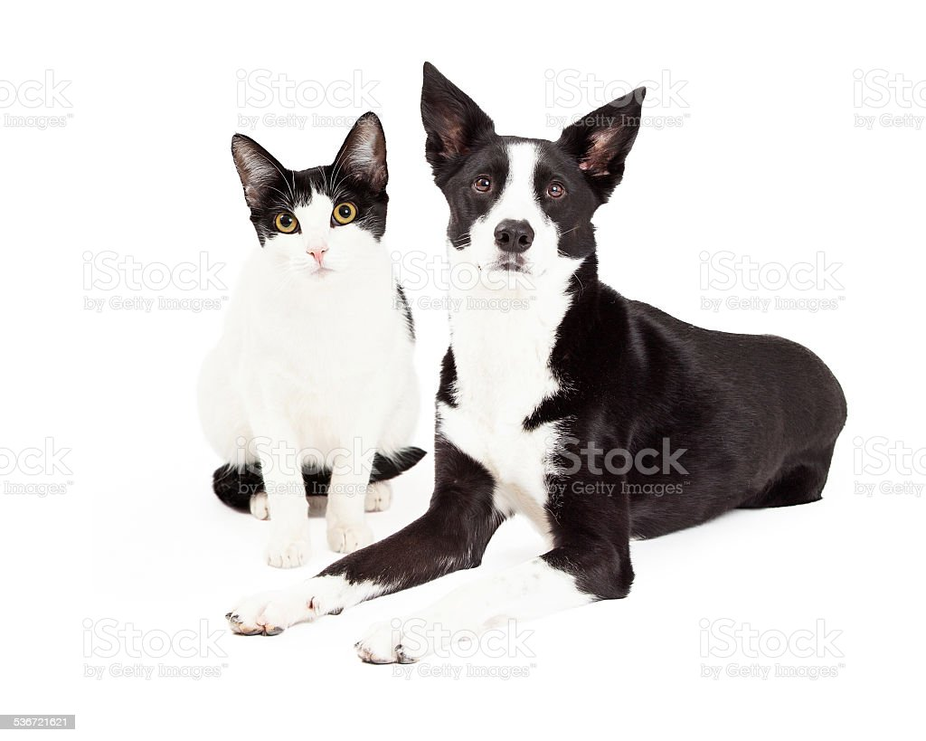 Blanco y negro de gatos y perros - foto de stock