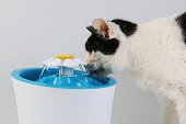 istock black and white cat drinks fresh water from an electric drinking fountain 1196190807