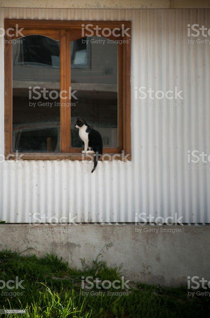 gato blanco y negro en una ventana - foto de stock