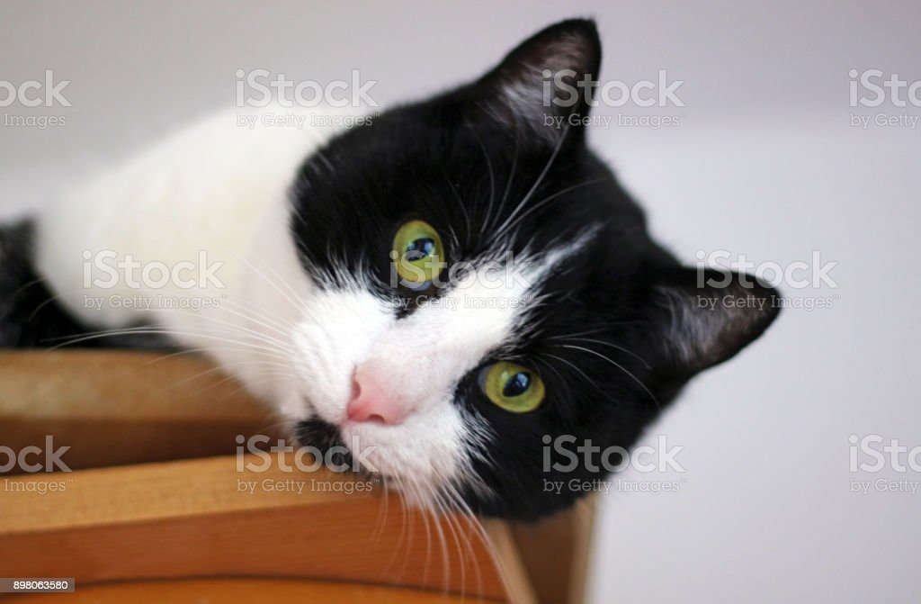 black and white cat lying on a cupboard stock photo