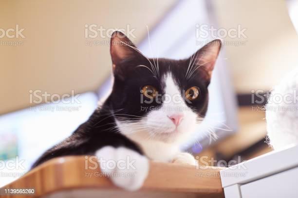 Black and white cat on a computer desk picture id1139565260?b=1&k=6&m=1139565260&s=612x612&h=8bfp1mty1gl 93jmgawpmvt8co66peuax65zffsffzk=