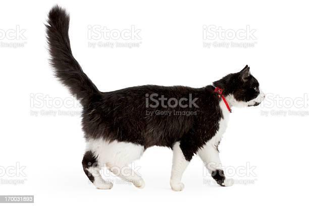 Black and white cat picture id170031893?b=1&k=6&m=170031893&s=612x612&h=zor8dje7dj0klbw5cofd9dnfuo5ptcuemvon5ztw4e0=
