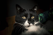 black and white cat, close up