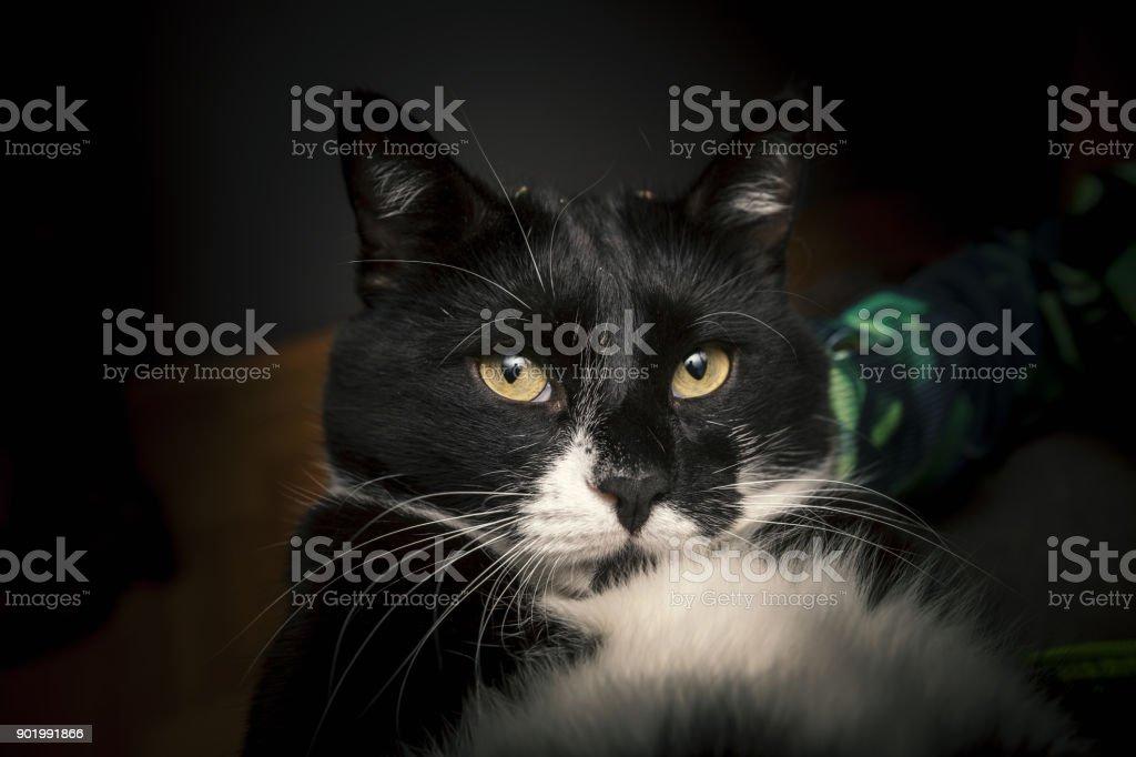 Schwarze und weiße Katze  – Foto
