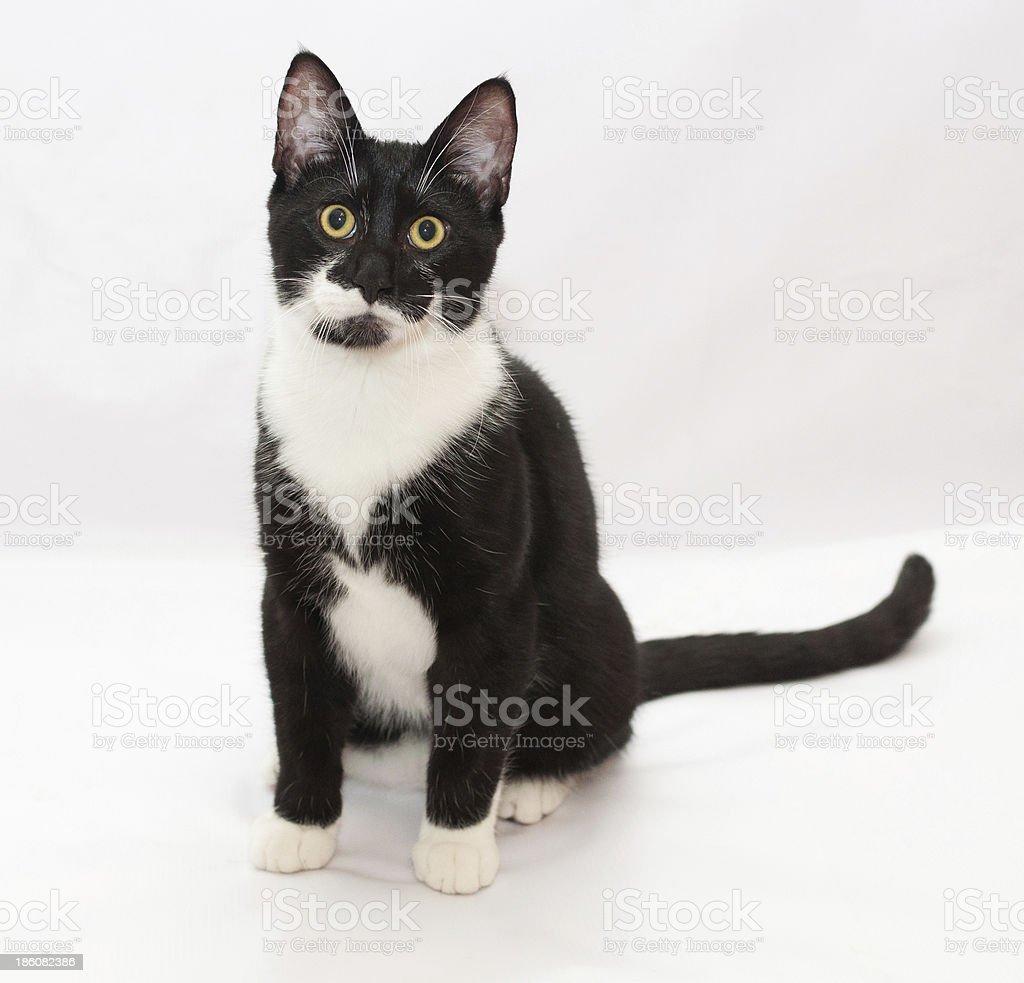 Black and white cat sitting stock photo