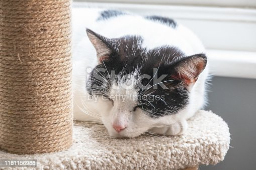 Closeup of a black and white cat sleeping on a cat tree