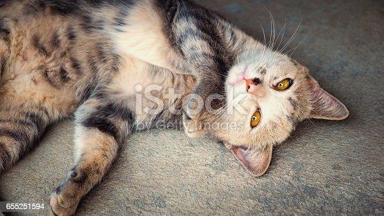 istock Black and white cat sleeping on concrete background, Cat portrait 655251594
