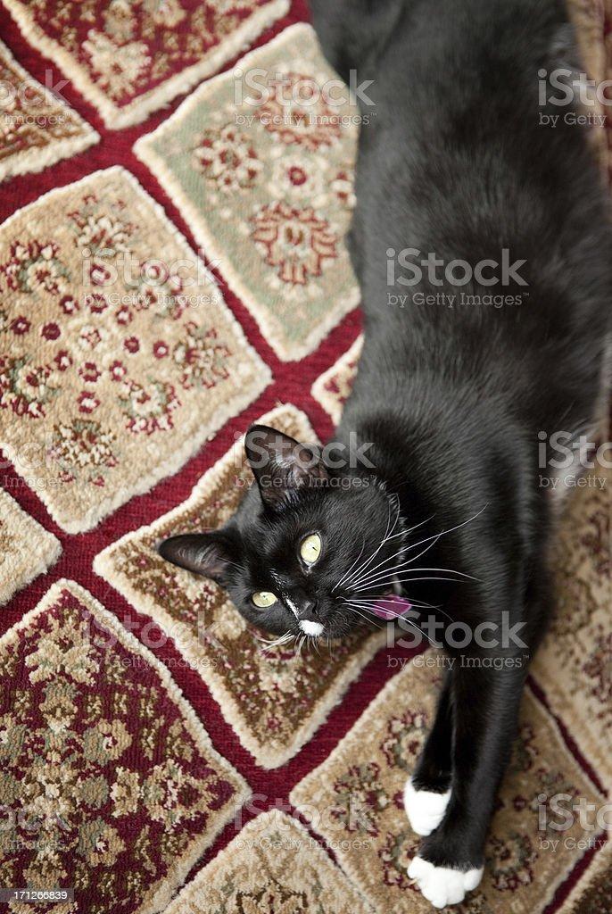 Schwarze und weiße Katze Dehnung auf Teppich – Foto