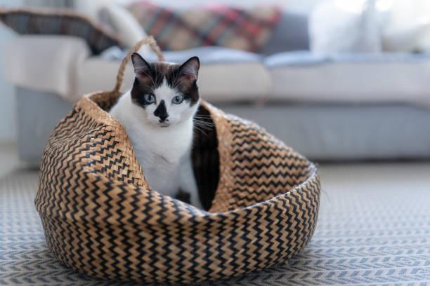 Black and white cat with blue eyes inside a wicker basket picture id1280289895?b=1&k=6&m=1280289895&s=612x612&w=0&h=fxkomrdopldfoa5nyzkuqoewcpzkef6skchqajpgcte=