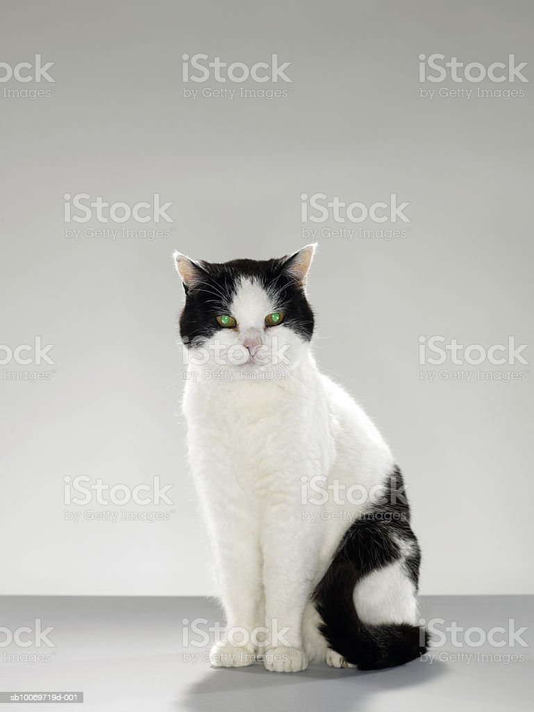 Black and white cat with glowing green eyes 免版稅 stock photo