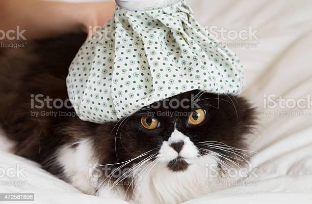 Black and white cat with patterned water bottle on its head picture id472581698?b=1&k=6&m=472581698&s=612x612&h=yab0oqhrlfqotdb16gl9yiinjsao5k1vvblhsc3wbau=