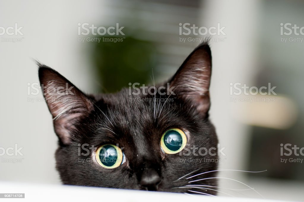 black and white cat with white mustache stock photo