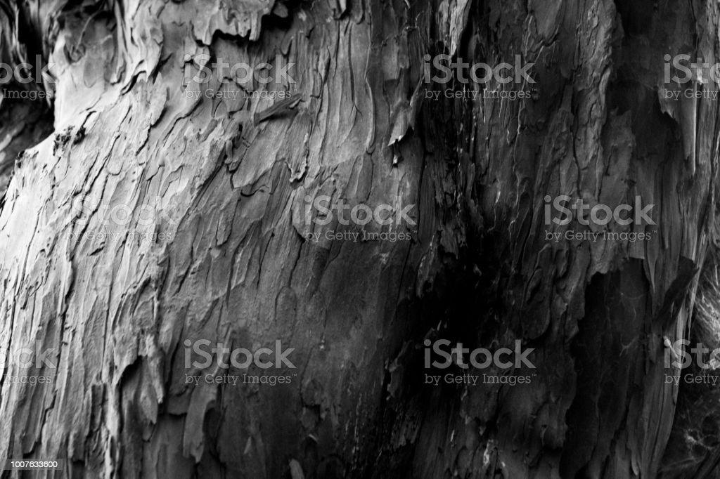 Black and white close up of tree bark stock photo