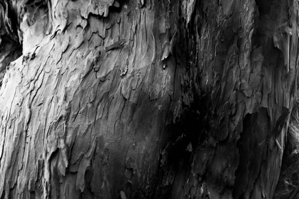 Black and white close up of tree bark stock photo