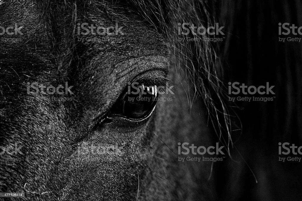 Black and white close up image of horses eye stock photo