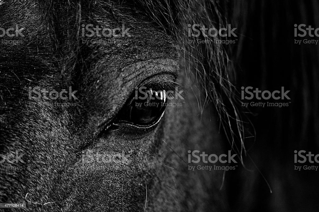 black and white close-up  image of  horse's eye stock photo