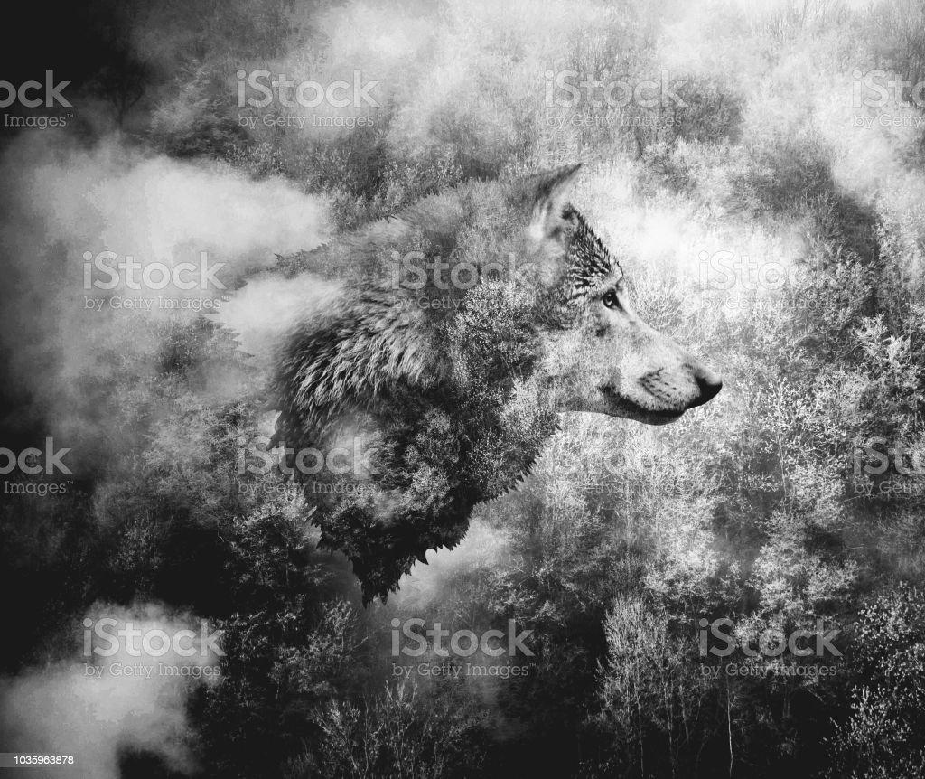 Svart och vitt Collage: varg huvudet och Misty skogen. - Royaltyfri Dimma Bildbanksbilder