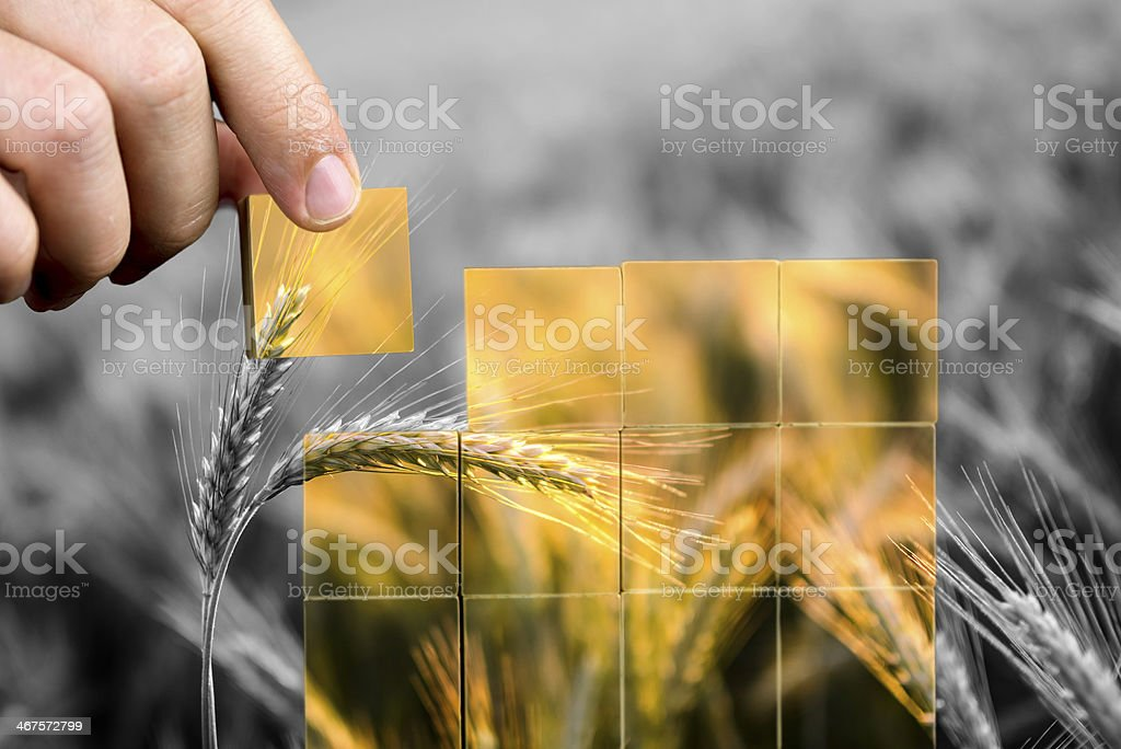 Black and white corn with colored square stock photo