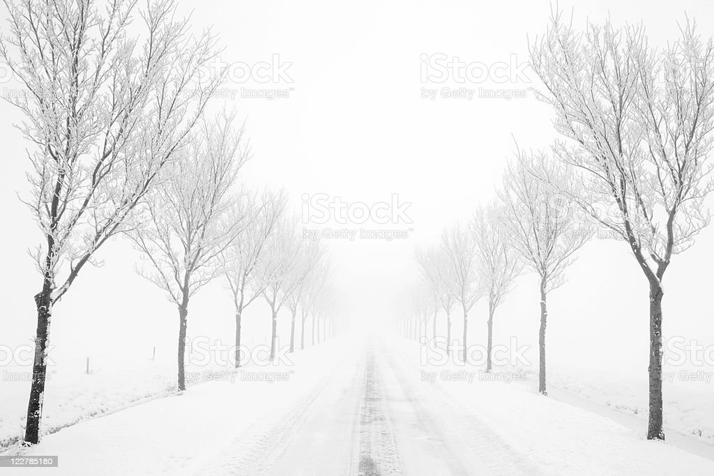 Black And White Country Road With Trees In Winter Mist royalty-free stock photo