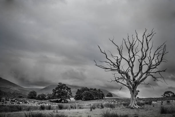 a black and white dead tree - planta morta imagens e fotografias de stock