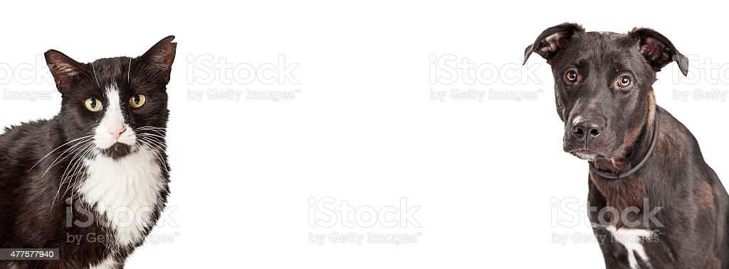 Black and White Dog and Cat Website Banner stock photo