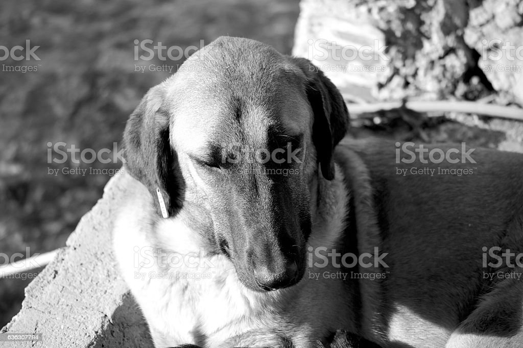 Black And White Dog From Above stock photo