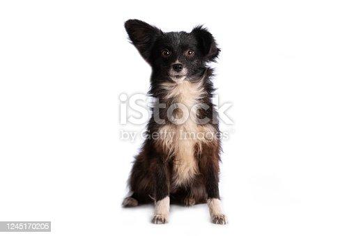 533229488 istock photo black and white doggy isolated 1245170205