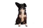 istock black and white doggy isolated 1245170205