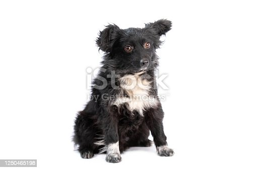 533229488 istock photo black and white doggy isolated 1250465198
