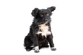 istock black and white doggy isolated 1250465198