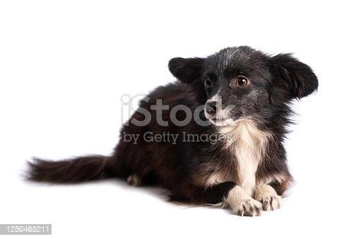 533229488 istock photo black and white doggy isolated 1250465211