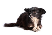 istock black and white doggy isolated 1250465211