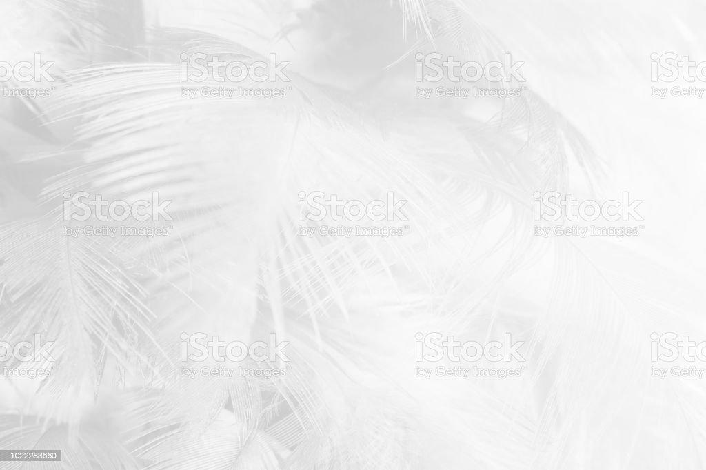 fond de texture de plumes noires et blanches - Photo