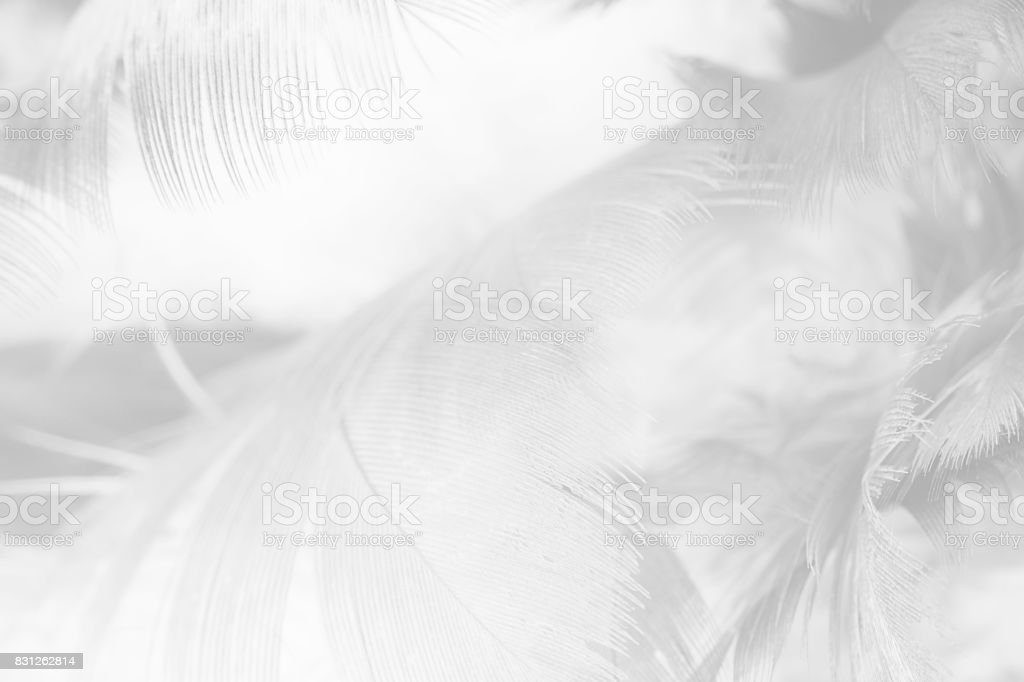 black and white feather texture background stock photo
