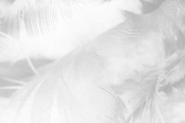 zwarte en witte veren patroon achtergrond - stekels stockfoto's en -beelden