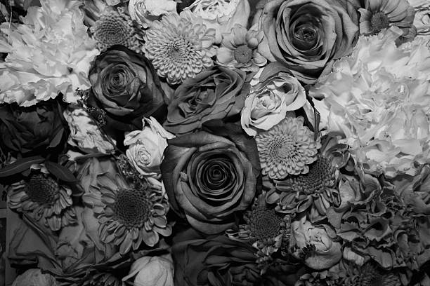 Royalty free rose black and white pictures images and stock photos black and white flower background stock photo mightylinksfo