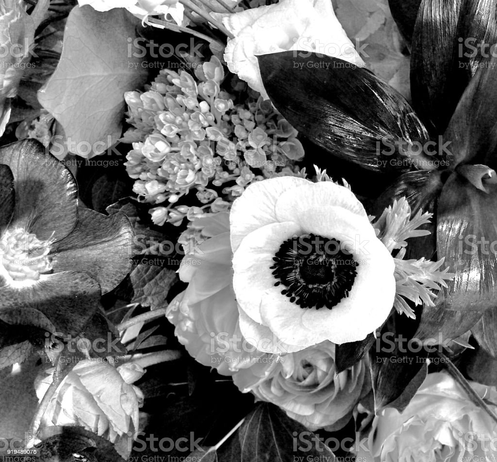 Black And White Flowers Stock Photo More Pictures Of Black And