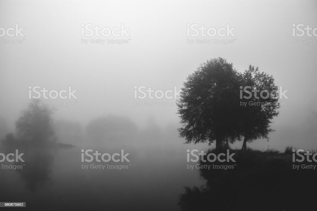 Black and white foggy delta solitary tree on an island over the water in winter stock photo