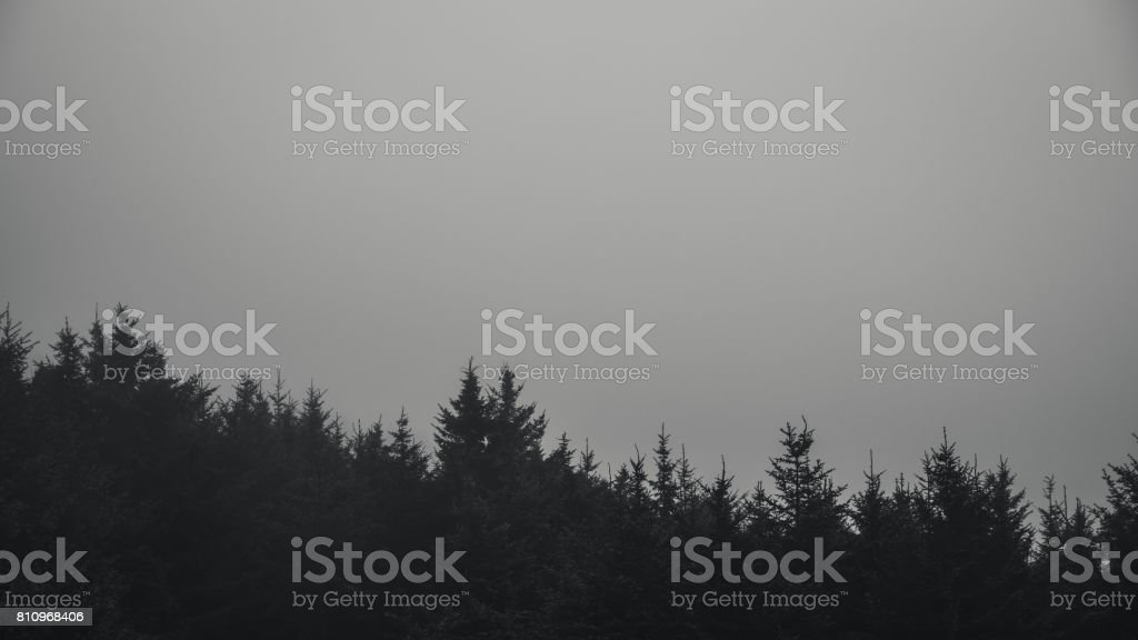 Black and white forest in fog. stock photo